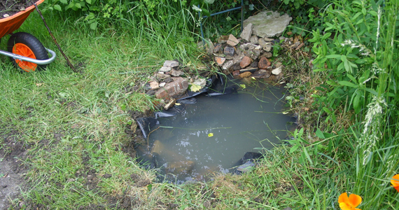Make A Small Pond Summer Activities For Kids Northern