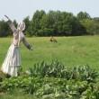 Wisconsin Scarecrow