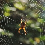 Spider in a Spider's Web