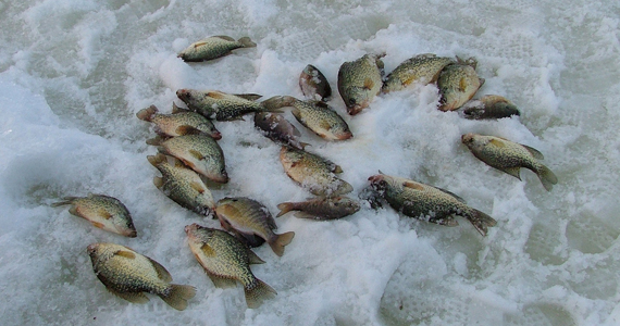 Northern wisconsin fishing report eagle river vilas for Vilas county fishing report