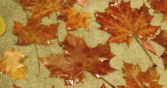 Preserved Leaves with Glycerin