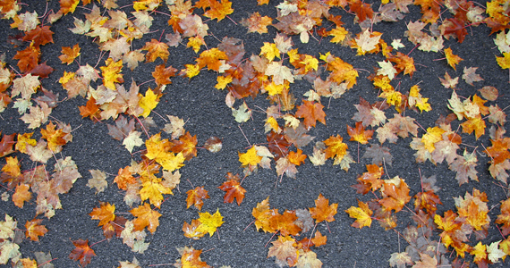 Scattered Leaves in Wisconsin