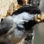 Northern Wisconsin Bird Nest