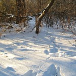 Northern Wisconsin Animal Tracks In The Snow